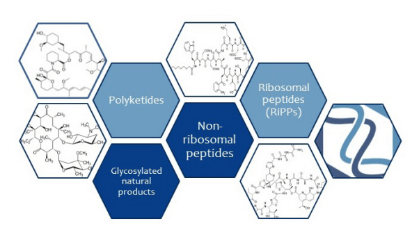 Organic Chemistry And Natural Products